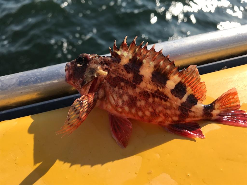 f:id:fishingandwine:20201230221447j:image