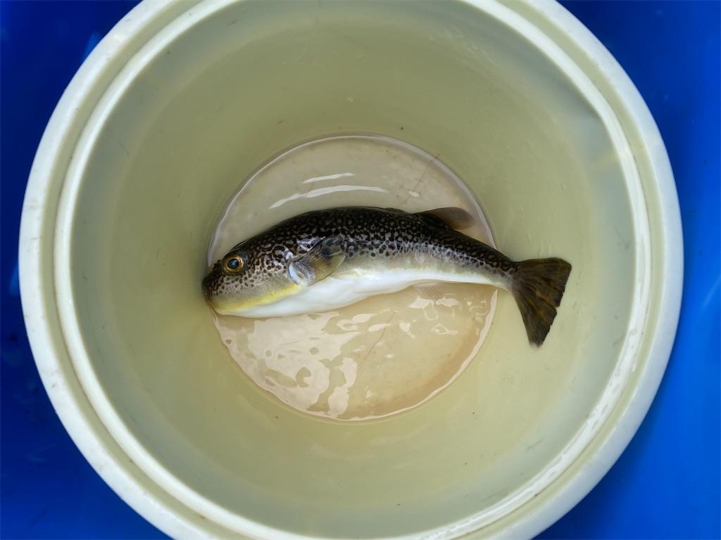 f:id:fishingandwine:20210627150632j:image