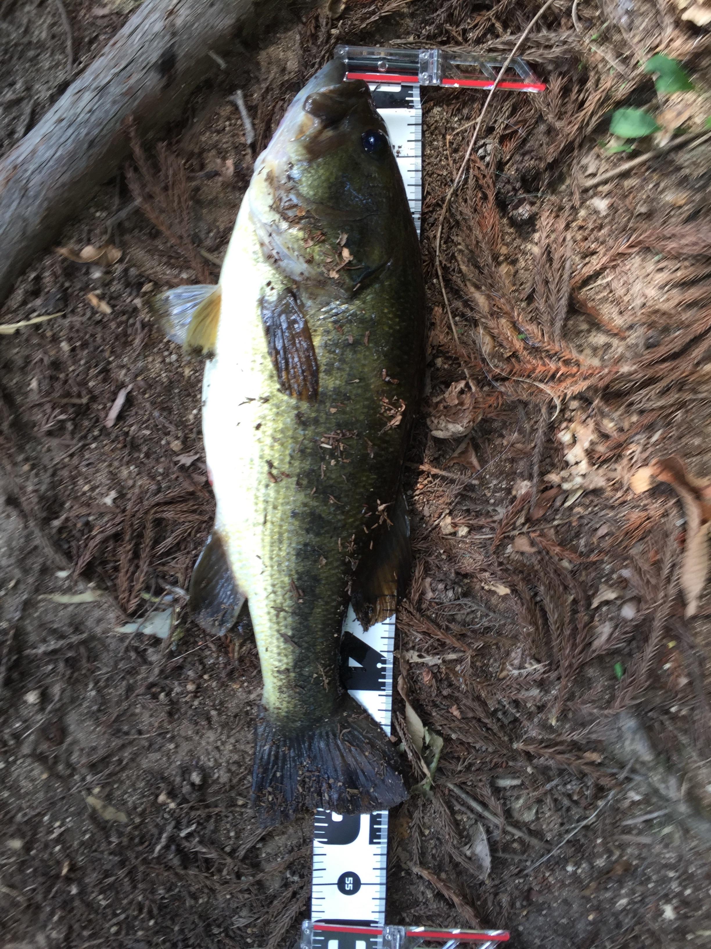f:id:fishinglife:20160811202514j:image