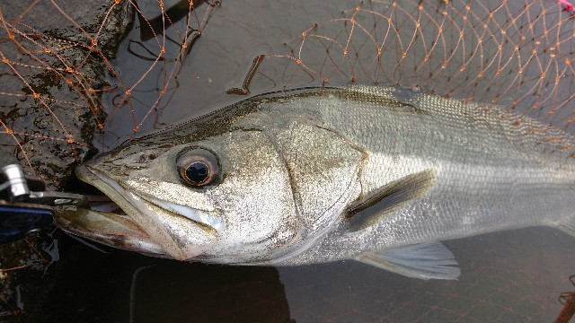 f:id:fishingpapa:20200731161707j:image