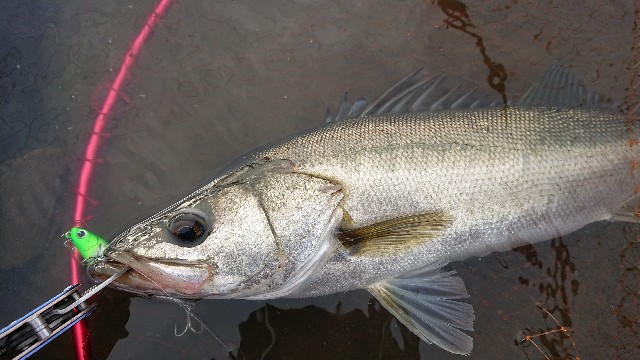 f:id:fishingpapa:20200731161747j:image