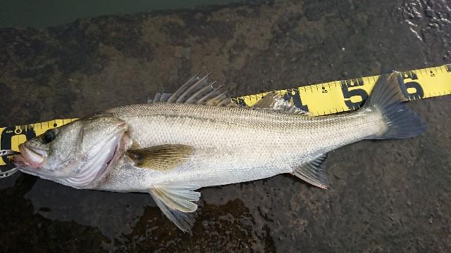 f:id:fishingpapa:20200731161810j:image