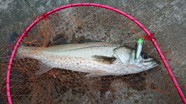 f:id:fishingpapa:20200731161834j:image