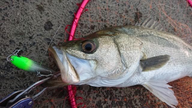 f:id:fishingpapa:20200731161933j:image