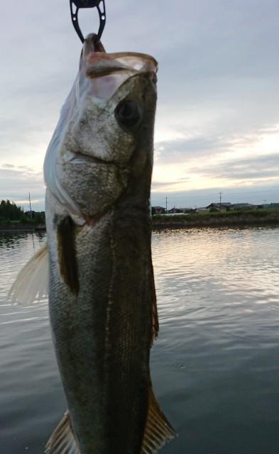f:id:fishingpapa:20200731195209j:image