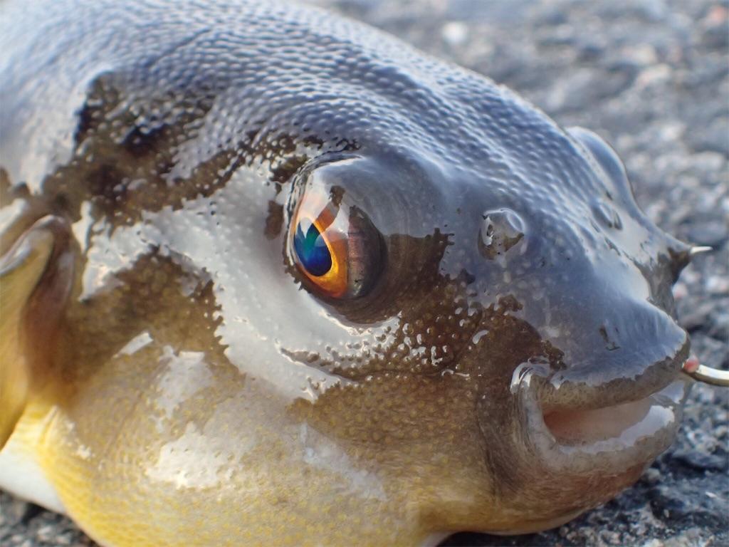 f:id:fishingtripper:20170626185435j:image