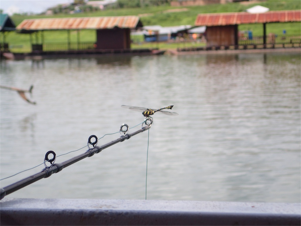f:id:fishingtripper:20170803083546j:image