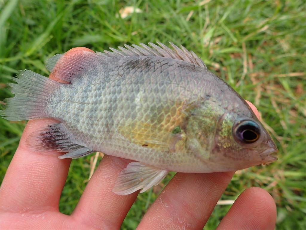 f:id:fishingtripper:20181016125821j:image