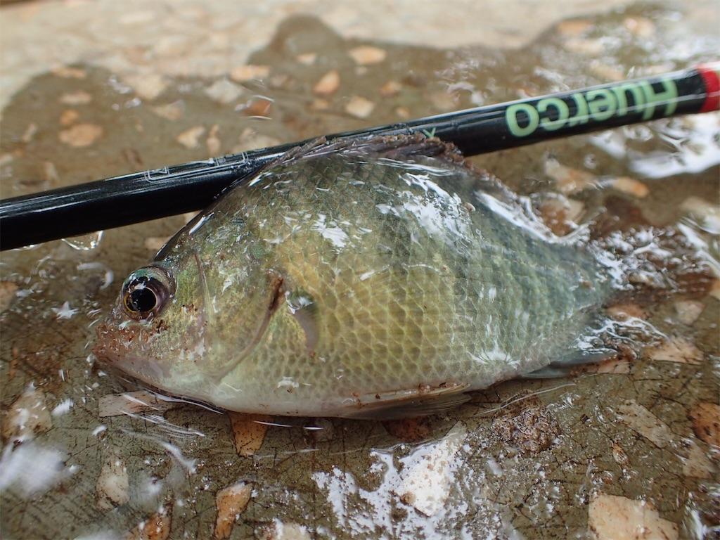 f:id:fishingtripper:20181016131155j:image