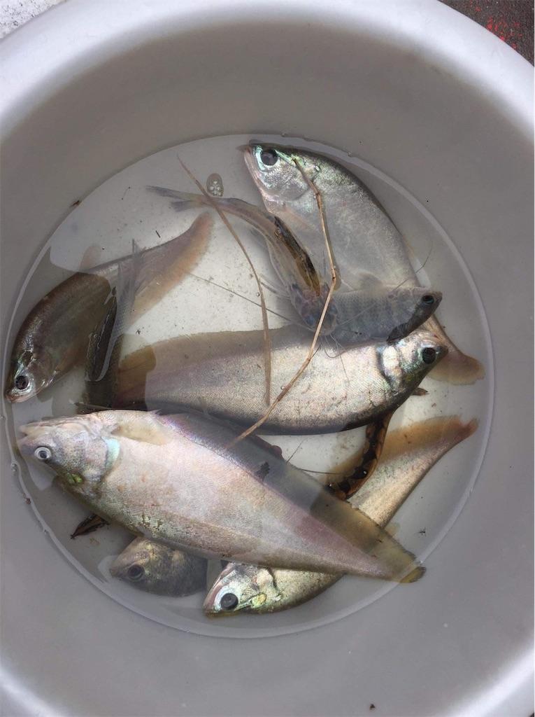 f:id:fishingtripper:20181017134644j:image