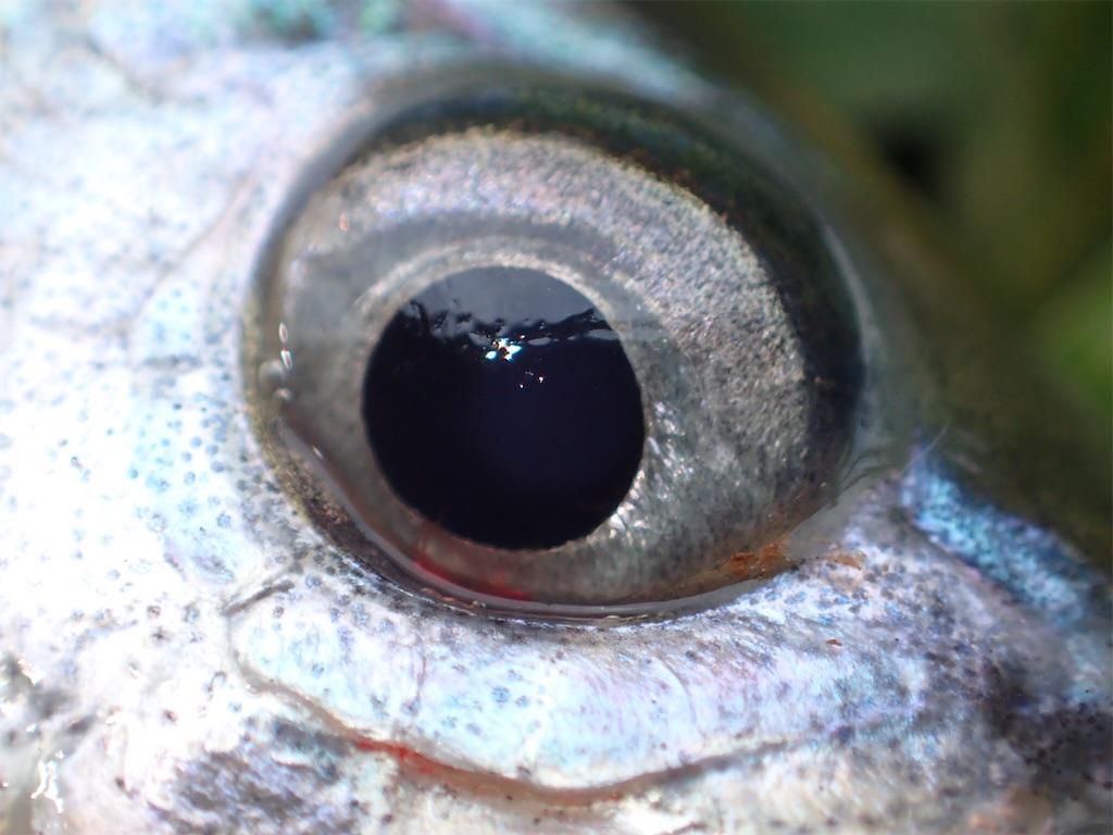 f:id:fishingtripper:20181030105041j:image