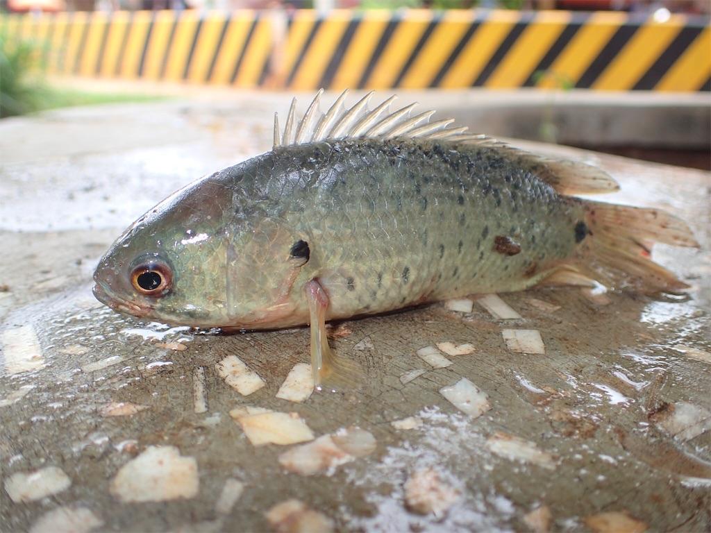 f:id:fishingtripper:20181030105434j:image