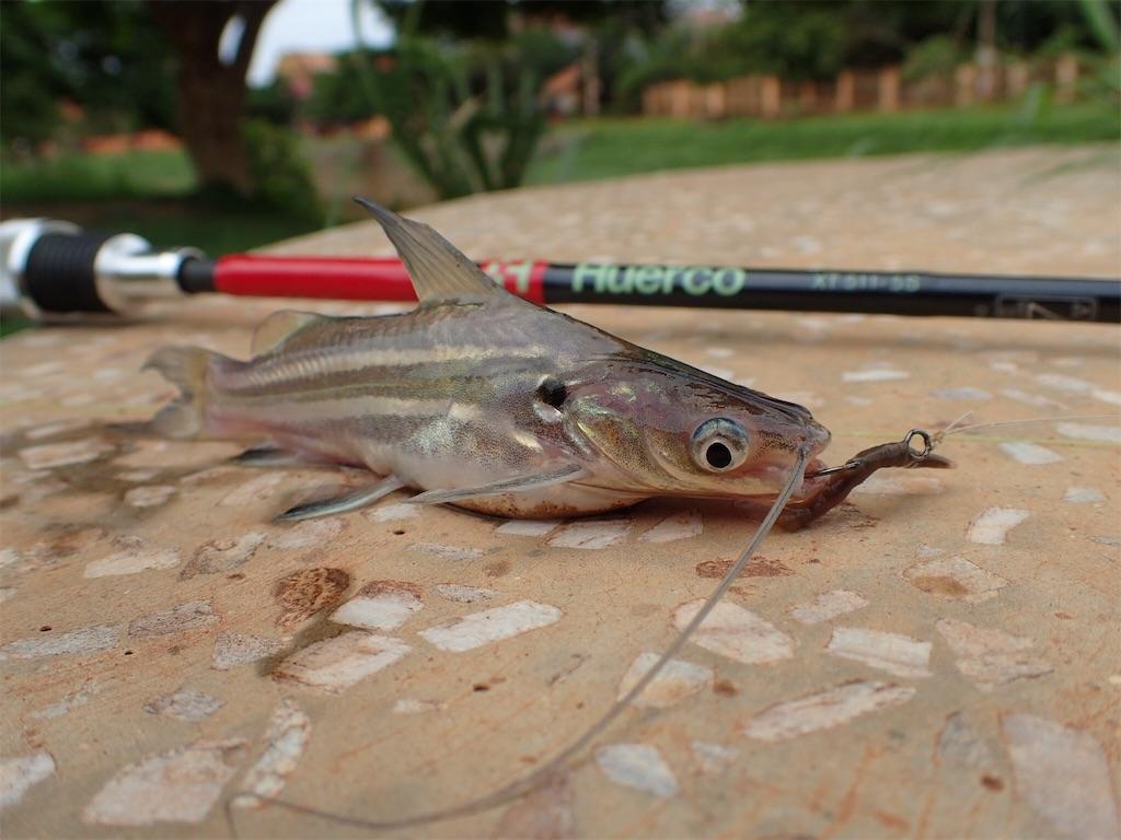 f:id:fishingtripper:20181115115930j:image