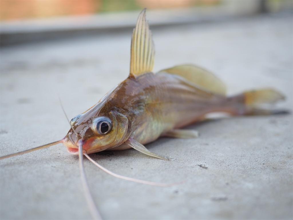f:id:fishingtripper:20190111082330j:image