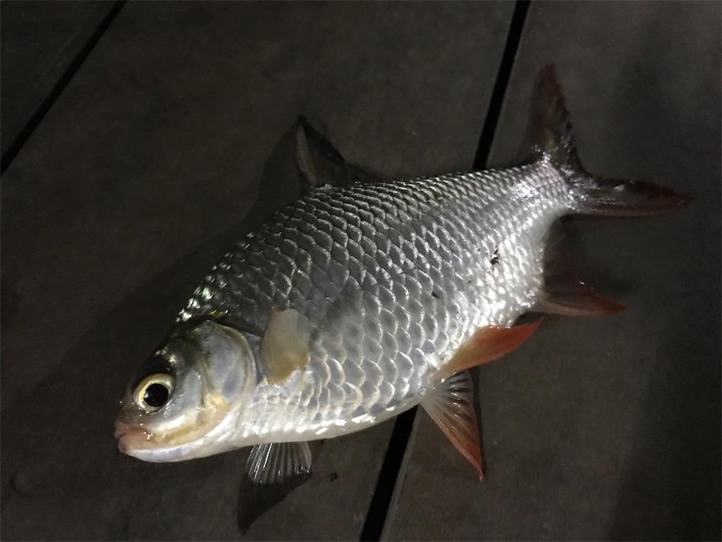 f:id:fishingtripper:20190114091739j:image
