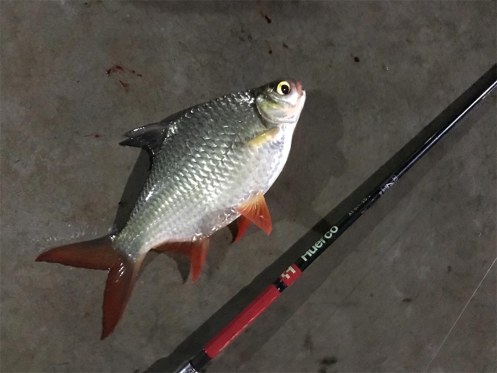 f:id:fishingtripper:20190114091811j:image