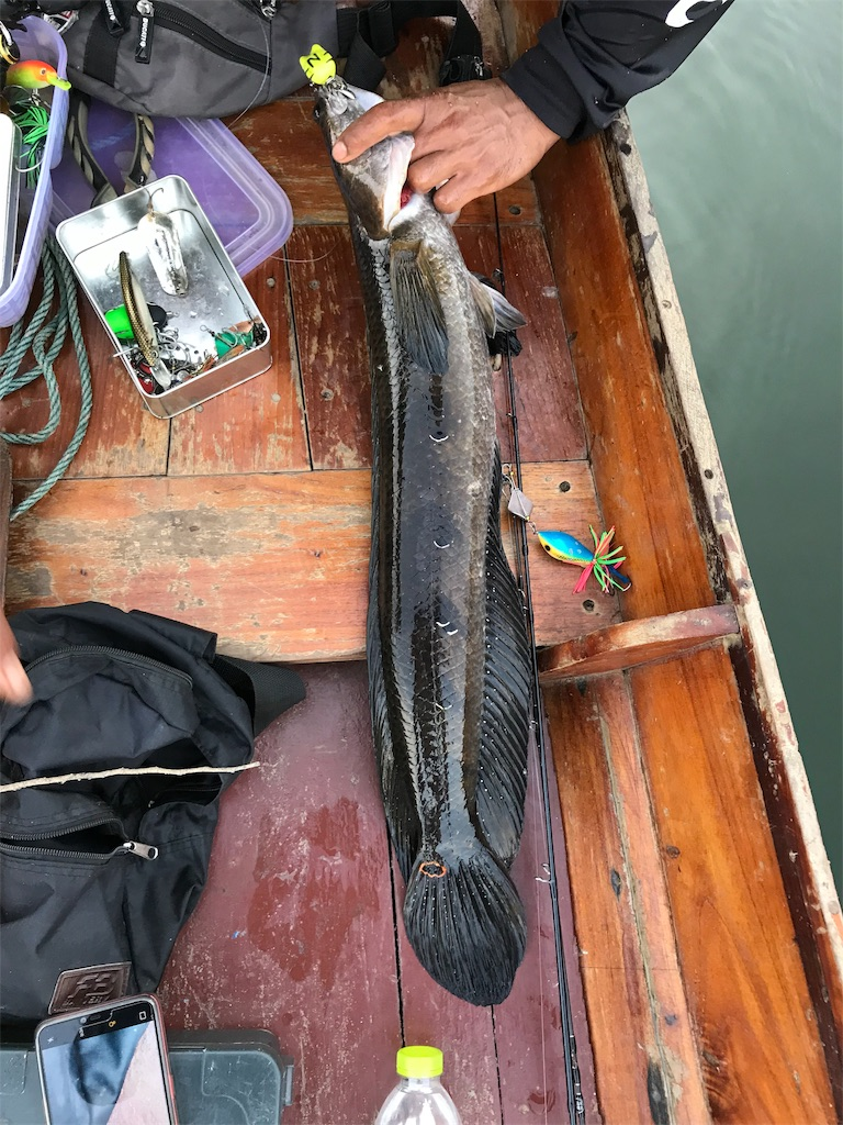f:id:fishingtripper:20190118102846j:image