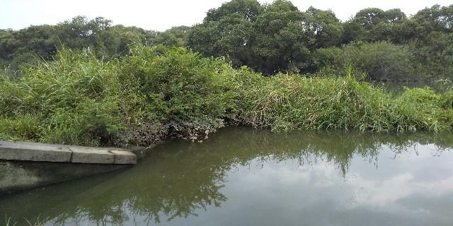 f:id:fishman-takasan-blog:20201028204415j:image
