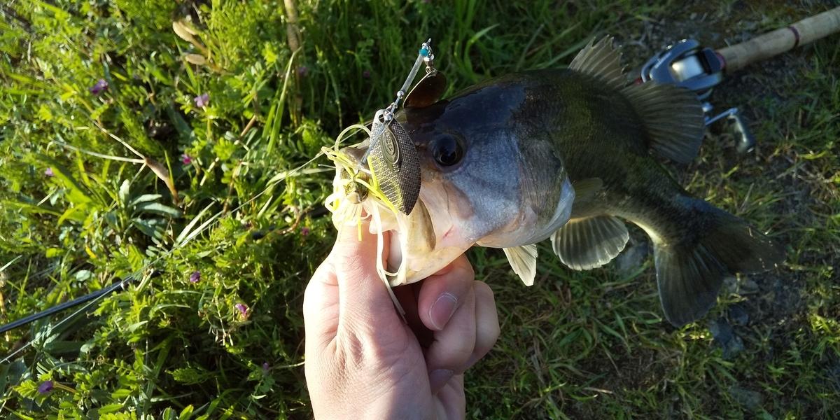 f:id:fishman-takasan-blog:20210328083701j:plain