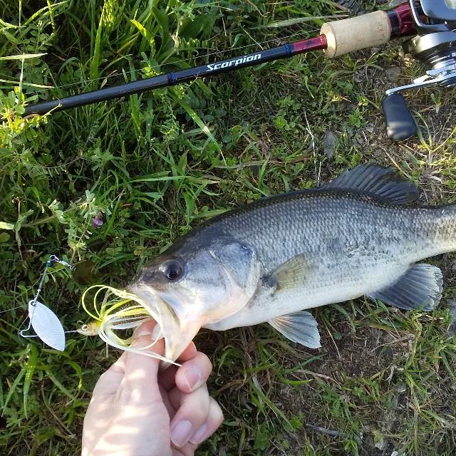 f:id:fishman-takasan-blog:20210404203957j:image