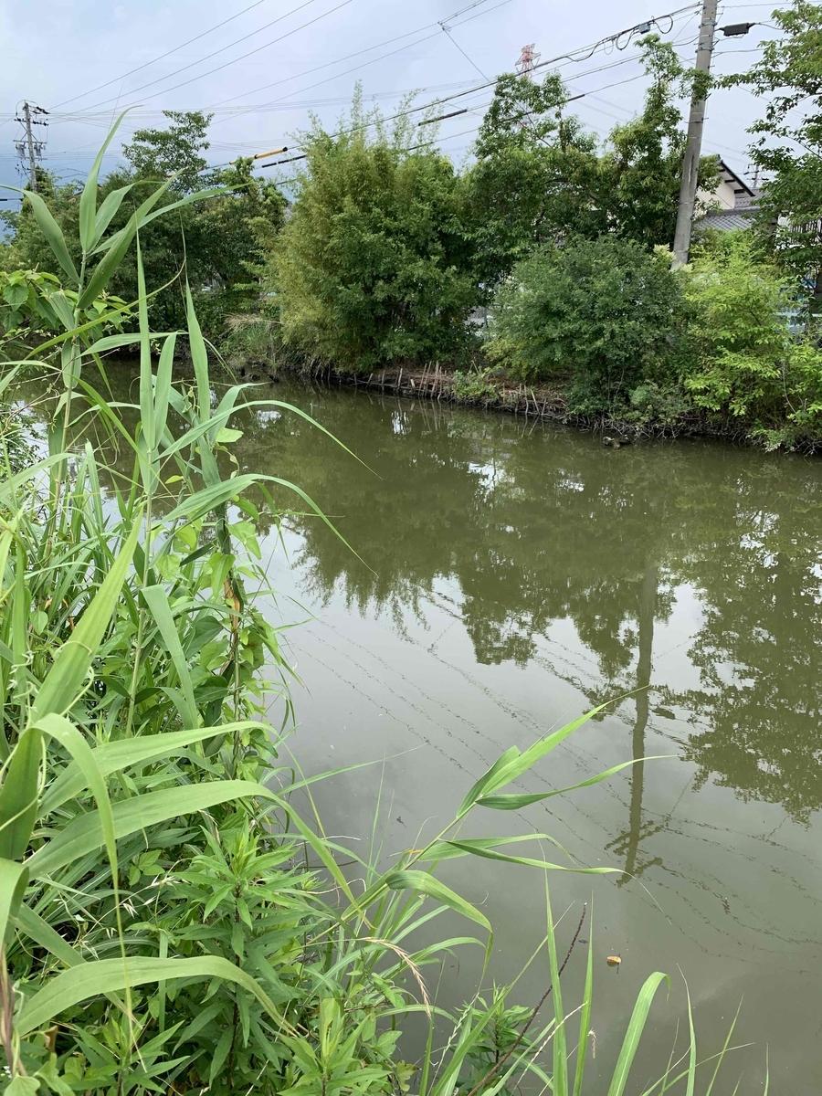 f:id:fishman-takasan-blog:20210628103628j:plain