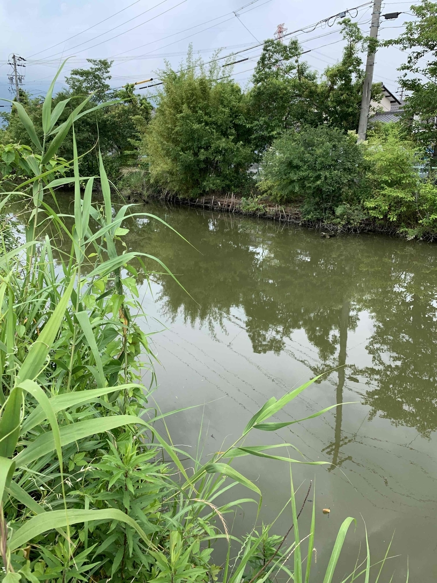f:id:fishman-takasan-blog:20210822112144j:plain