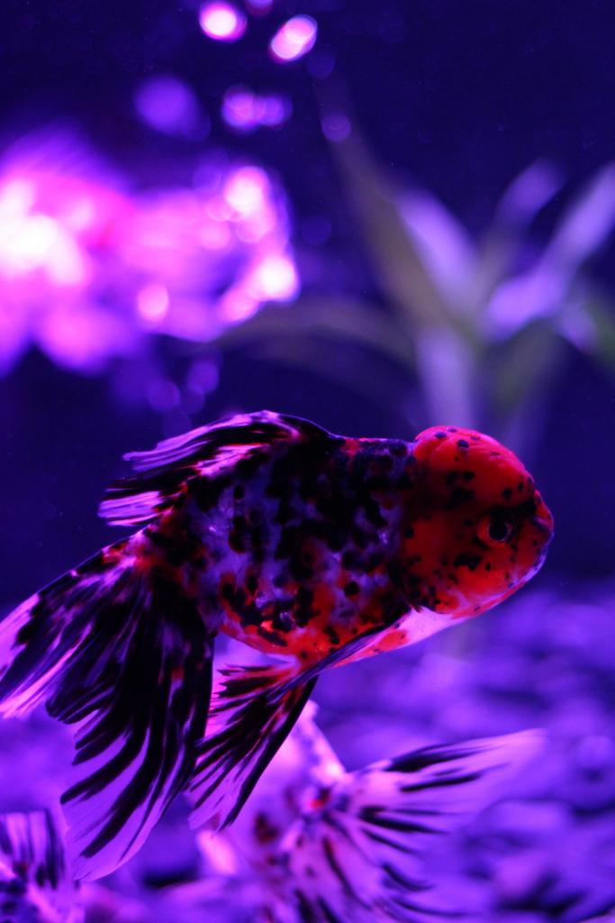 f:id:fishstory_tb:20160805100945j:plain