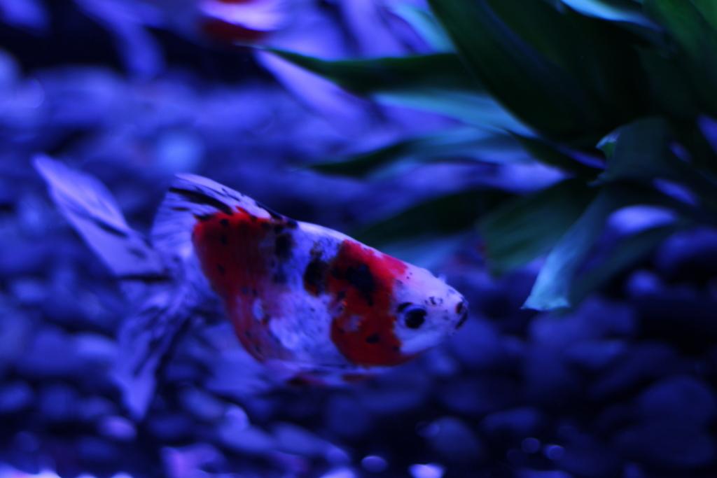 f:id:fishstory_tb:20160805103729j:plain