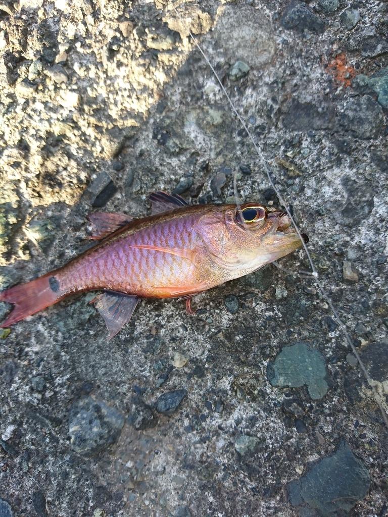 f:id:fishtech:20180902224934j:plain