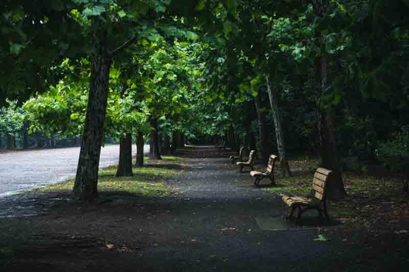 椅子 木々