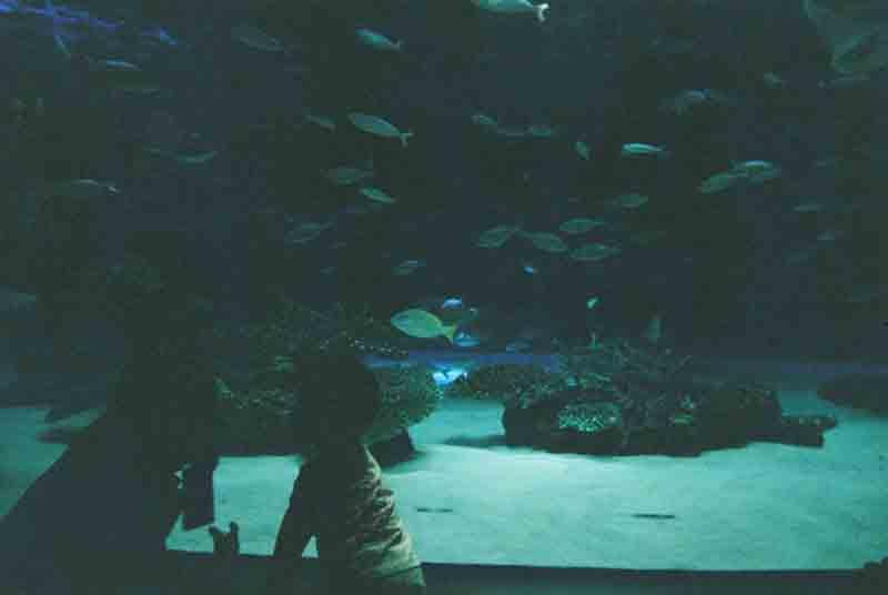 写ルンです 水族館 水槽