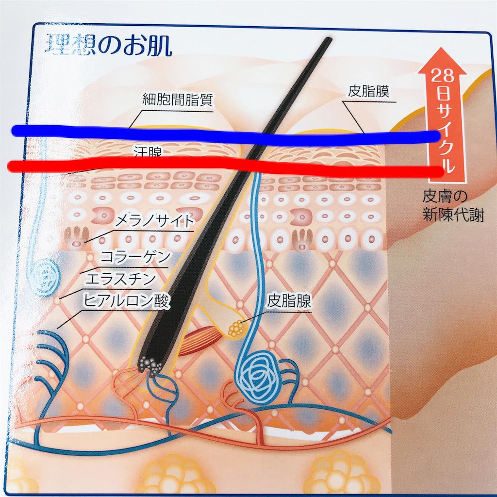 f:id:flat37takashi:20180406102535p:image