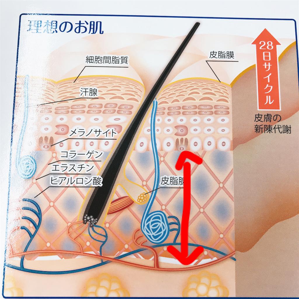 f:id:flat37takashi:20180406102842p:image