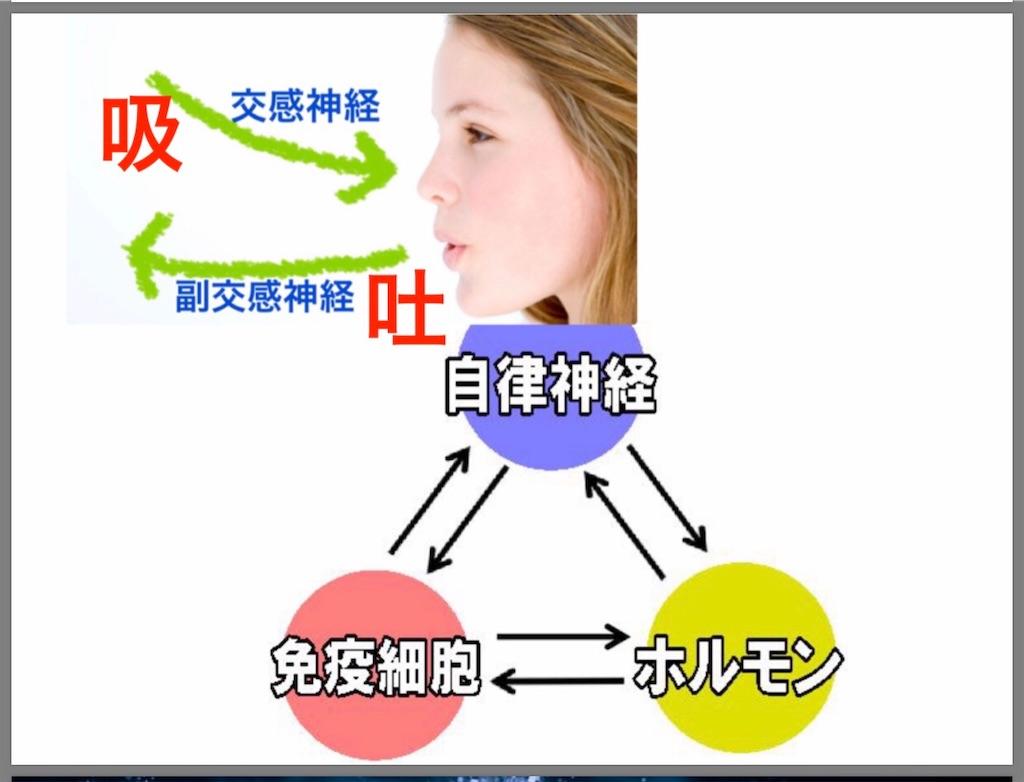 f:id:flat37takashi:20190212105426j:image