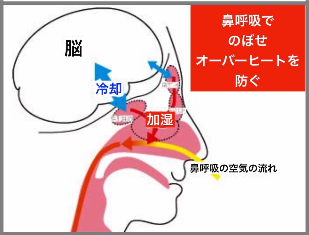 f:id:flat37takashi:20190318183624j:image