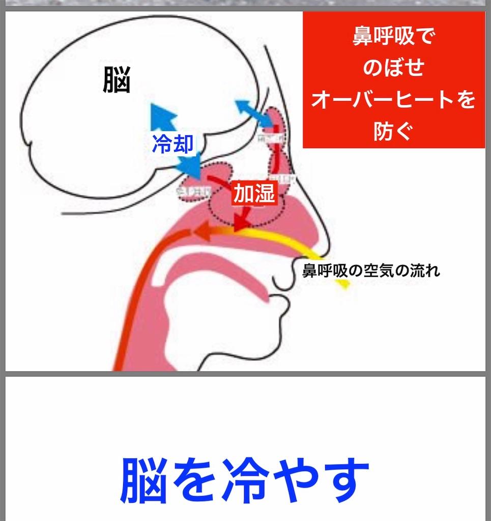 f:id:flat37takashi:20190529095942j:image
