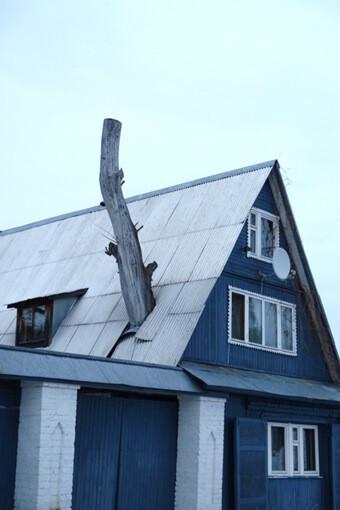 屋根を突き破った古木