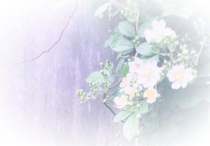f:id:fleur12:20200110213039p:plain