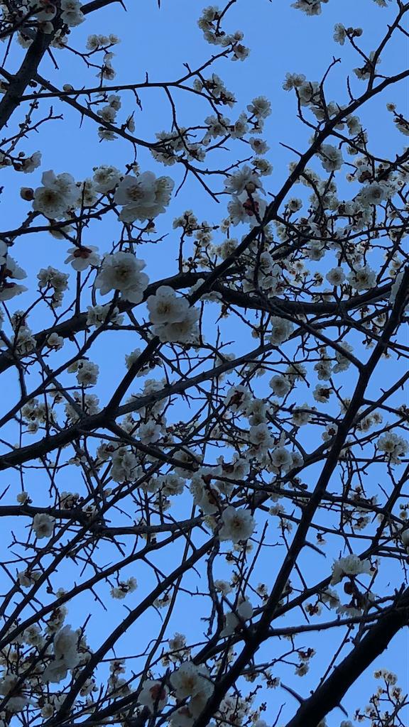 f:id:fleursereine:20210221001258p:image
