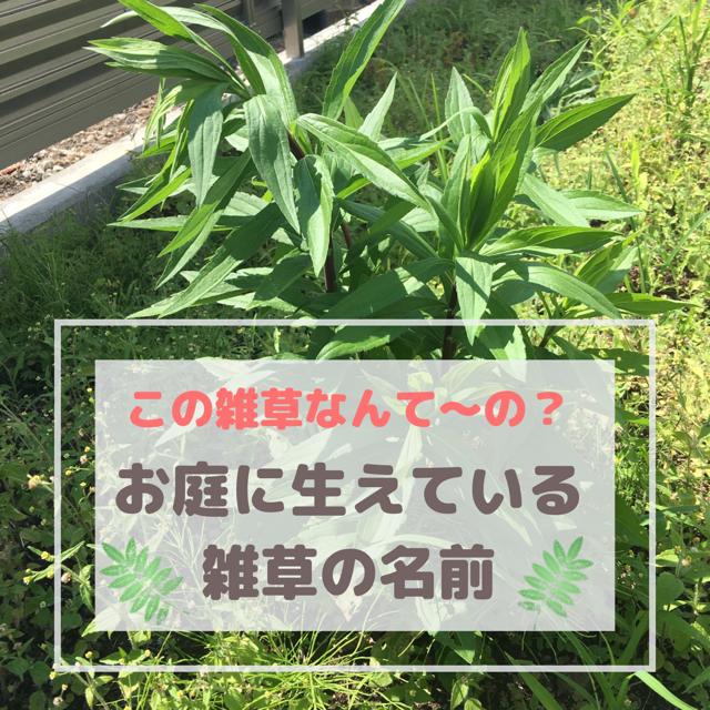 庭に生えている雑草の名前を調べてみた
