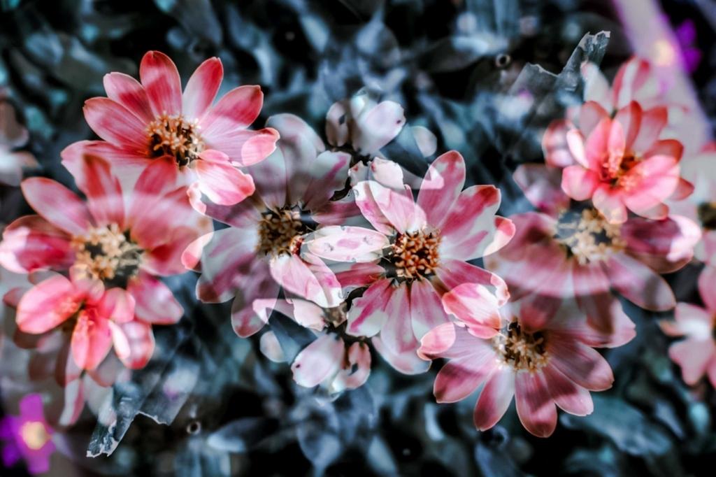 f:id:floraisony:20180102112037j:plain