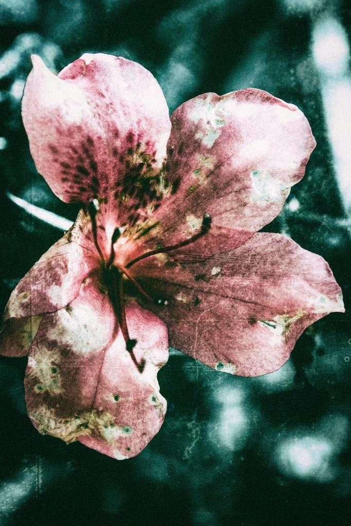 f:id:floraisony:20180115100357j:plain