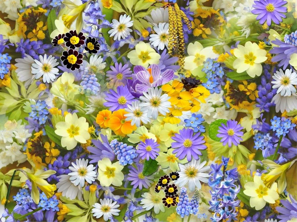 f:id:floraisony:20180125110804j:plain