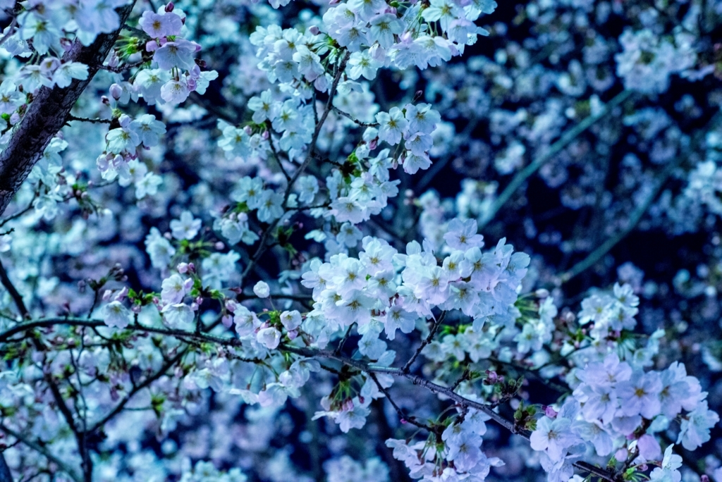 f:id:floraisony:20180327092423j:plain