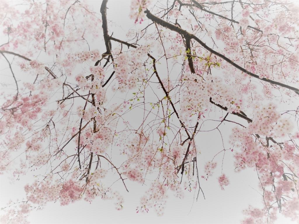 f:id:floraisony:20180403144604j:plain
