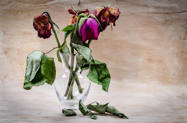 f:id:floraisony:20180819120752j:plain