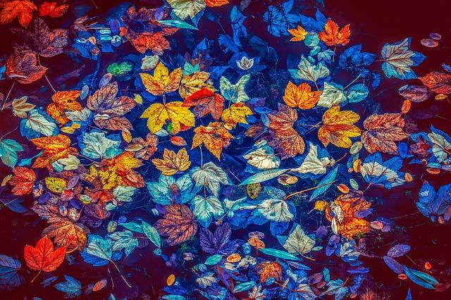 f:id:floraisony:20190108225546j:plain