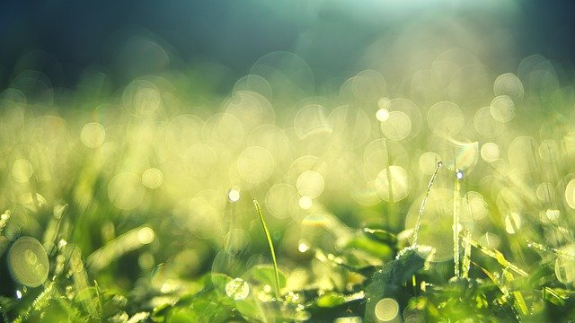 f:id:floraisony:20200130083109j:plain