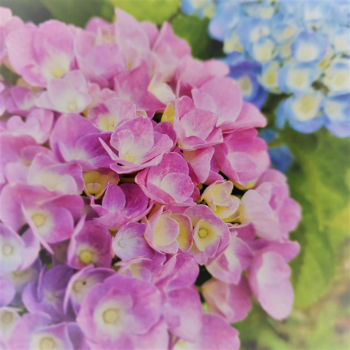 f:id:floraisony:20200601212539j:plain