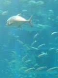 太平洋水槽@海遊館